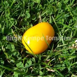 Yellow Niunai