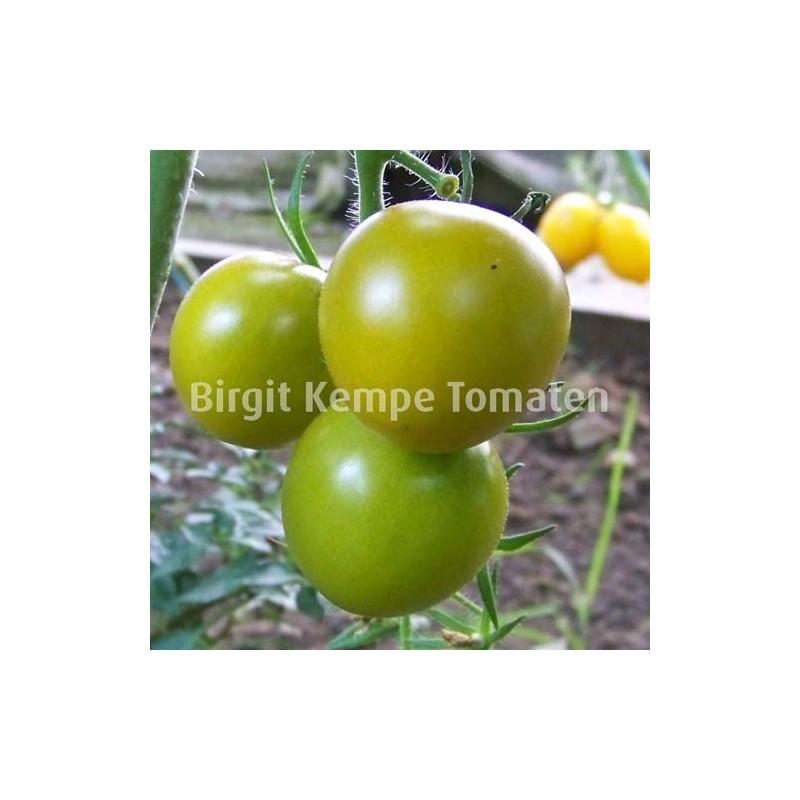Thompson Seedling Greem