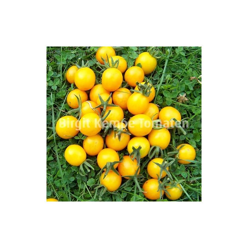 Orange Wildtomate