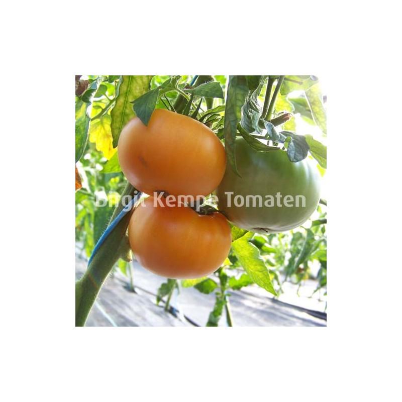 Azoychka Orange