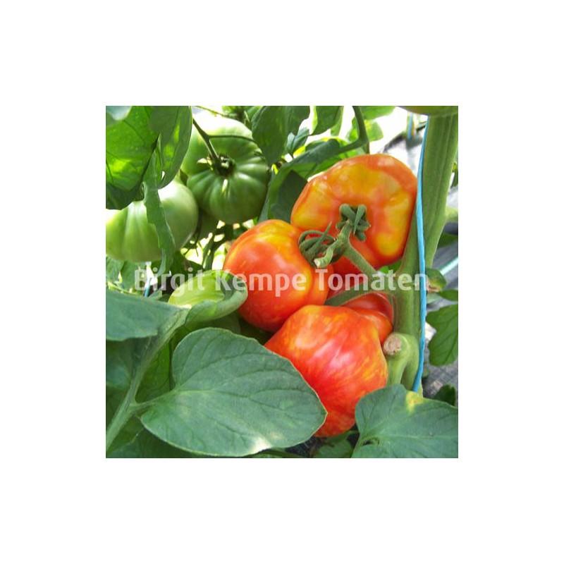 Geflammte Paprikaförmige (reif)
