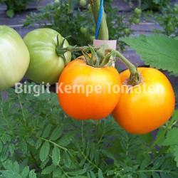 Orange a groß fruits