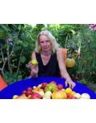 Tomatensaatgut Birgit Kempe